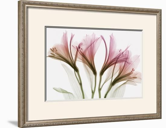 Alstromeria-Steven N^ Meyers-Framed Art Print