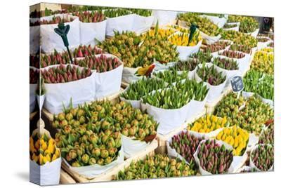 Tulips for Sale in the Bloemenmarkt, the Floating Flower Market, Amsterdam, Netherlands, Europe