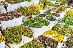 Tulips for Sale in the Bloemenmarkt, the Floating Flower Market, Amsterdam, Netherlands, Europe by Amanda Hall