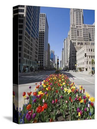 Tulips on North Michigan Avenue, the Magnificent Mile, Chicago, Illinois, USA