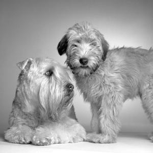 Ruff and Daisy by Amanda Jones