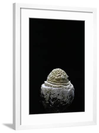 Amanita Muscaria (Fly Agaric)-Paul Starosta-Framed Photographic Print