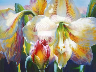 Amarylis-Elizabeth Horning-Premium Giclee Print