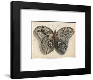 Amateur Naturalist's Depiction of a Moth