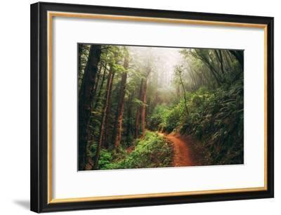 Amazing Misty John Muir Woods Coastal Trail, San Francisco Bay Area-Vincent James-Framed Photographic Print