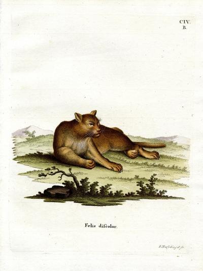 Amazon Cougar--Giclee Print