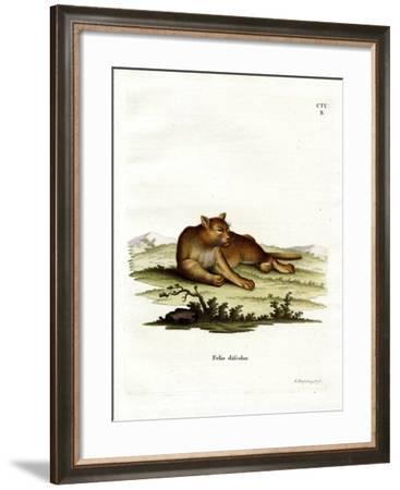 Amazon Cougar--Framed Giclee Print
