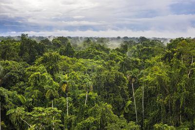 Amazon Rainforest at Sacha Lodge, Coca, Ecuador, South America-Matthew Williams-Ellis-Photographic Print
