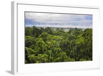 Amazon Rainforest At Sacha Lodge Coca Ecuador South America Photographic Print Matthew Williams Ellis Art Com