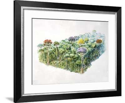 Amazon Rainforest--Framed Giclee Print