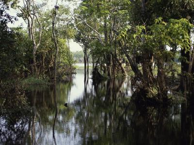 Amazon River, Brazil--Photographic Print