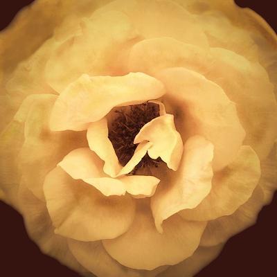 Amber Rose-Katja Marzahn-Giclee Print