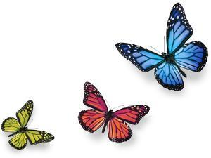 Green Pink And Blue Butterflies Isolated On White With Soft Shadow Beneath Each by Ambient Ideas