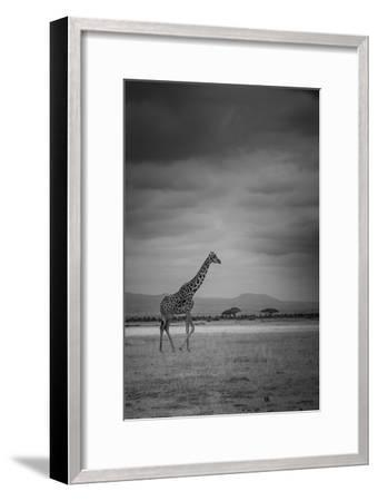 Amboseli Park,Kenya,Italy a Giraffe Shot in the Park Amboseli, Kenya, Shortly before a Thunderstorm-ClickAlps-Framed Photographic Print