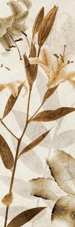 https://imgc.artprintimages.com/img/print/ambre-antique-ii_u-l-pigajx0.jpg?p=0