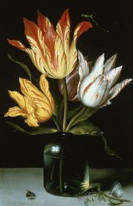 Tulips in a Glass Vase by Ambrosius Bosschaert the Elder