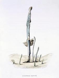 The Hasty Asparagus, from 'L'Empire Des Legumes, Memoires De Curcurbitus' by Amedee Varin