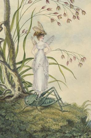 A Fairy with a Bee on Her Head Standing on a Grasshopper by Amelia Jane Murray