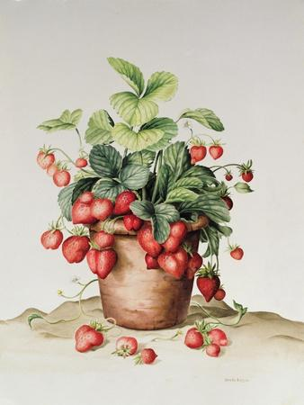 Strawberries in a Pot, 1998