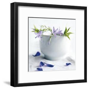 Bellflowers by Amelie Vuillon