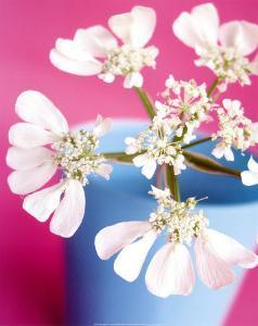Flower by Amelie Vuillon