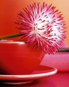 Flowers by Amelie Vuillon