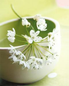 Little Flowers by Amelie Vuillon