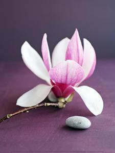 Magnolia et Caillou by Amelie Vuillon