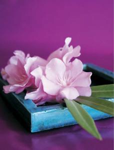 Oleander by Amelie Vuillon