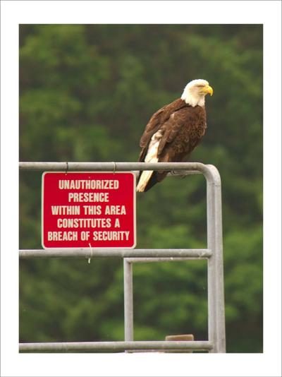 America Under Eagle Watch-Charles Glover-Giclee Print