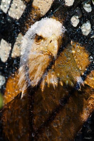 American Bald Eagle I-Gordon Semmens-Giclee Print