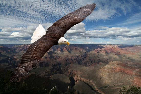 american-bald-eagle-mountains