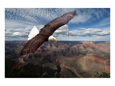 American Bald Eagle Mountains--Art Print