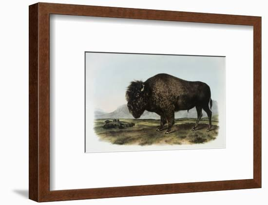 American Bison or Buffalo-John James Audubon-Framed Premium Giclee Print