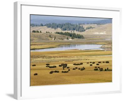 American Buffalo Yellowstone, US--Framed Photographic Print