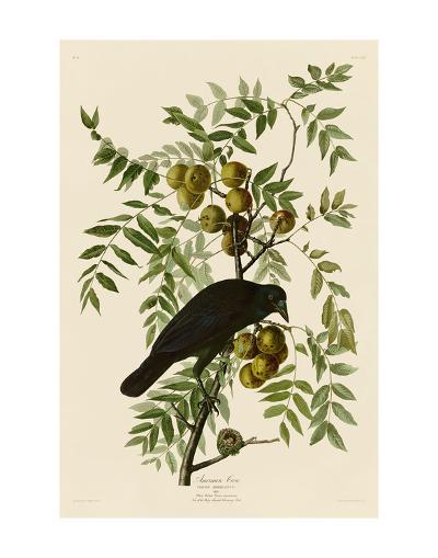 American Crow-John James Audubon-Art Print