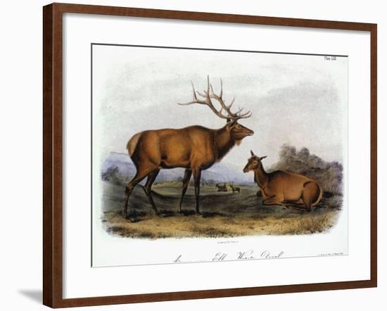 American Elk, 1846-John James Audubon-Framed Giclee Print