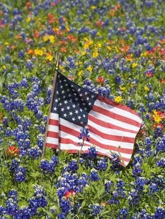 https://imgc.artprintimages.com/img/print/american-flag-in-field-of-blue-bonnets-paintbrush-texas-hill-country-usa_u-l-p25z8e0.jpg?p=0
