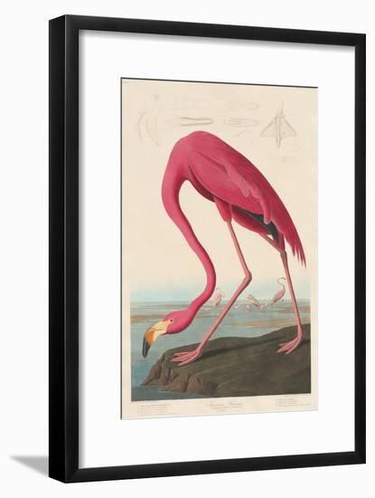 American Flamingo, 1838-John James Audubon-Framed Giclee Print