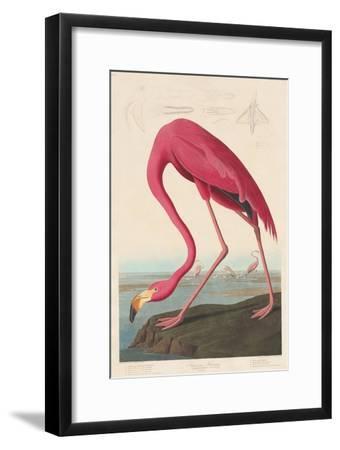 American Flamingo, 1838-John James Audubon-Framed Premium Giclee Print