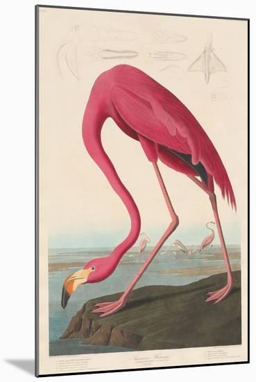 American Flamingo, 1838-John James Audubon-Mounted Premium Giclee Print