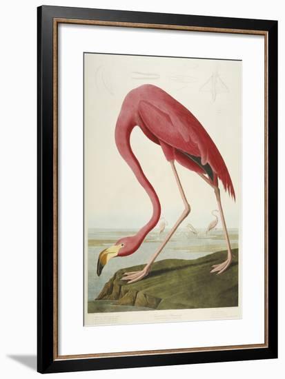 American Flamingo, from 'The Birds of America'-John James Audubon-Framed Premium Giclee Print