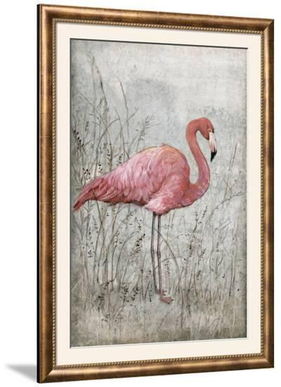American Flamingo I-Tim O'toole-Framed Photographic Print