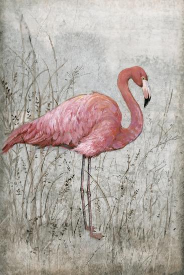 American Flamingo I-Tim O'toole-Art Print