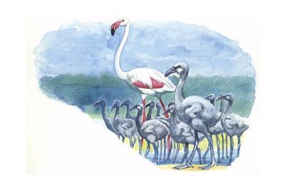 American Flamingo Phoenicopterus Ruber with Young--Giclee Print