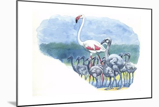 American Flamingo Phoenicopterus Ruber with Young--Mounted Giclee Print