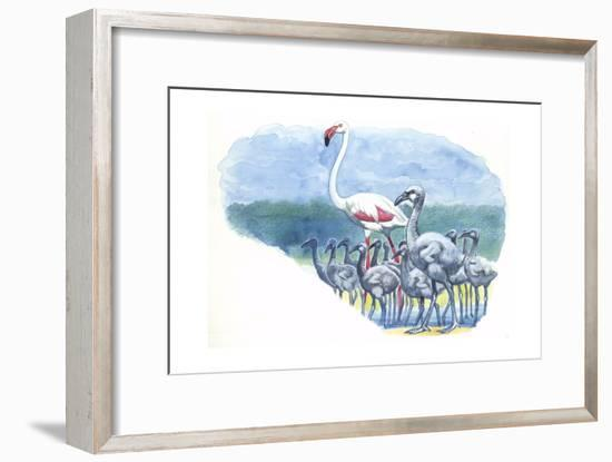 American Flamingo Phoenicopterus Ruber with Young--Framed Giclee Print