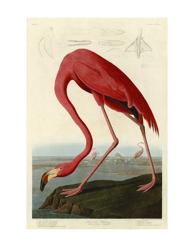 American Flamingo-John James Audubon-Art Print