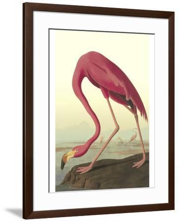 American Flamingo-John James Audubon-Framed Premium Giclee Print