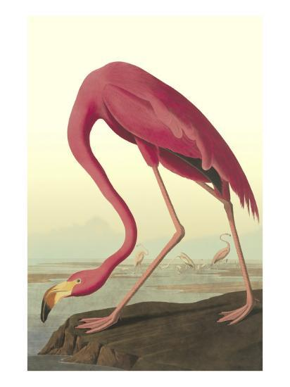 American Flamingo-John James Audubon-Art Print